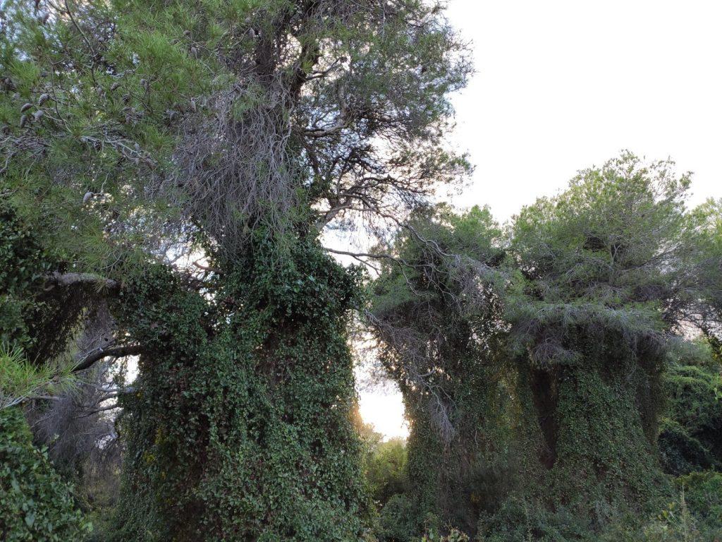 Bosque de la Dehesa del Saler