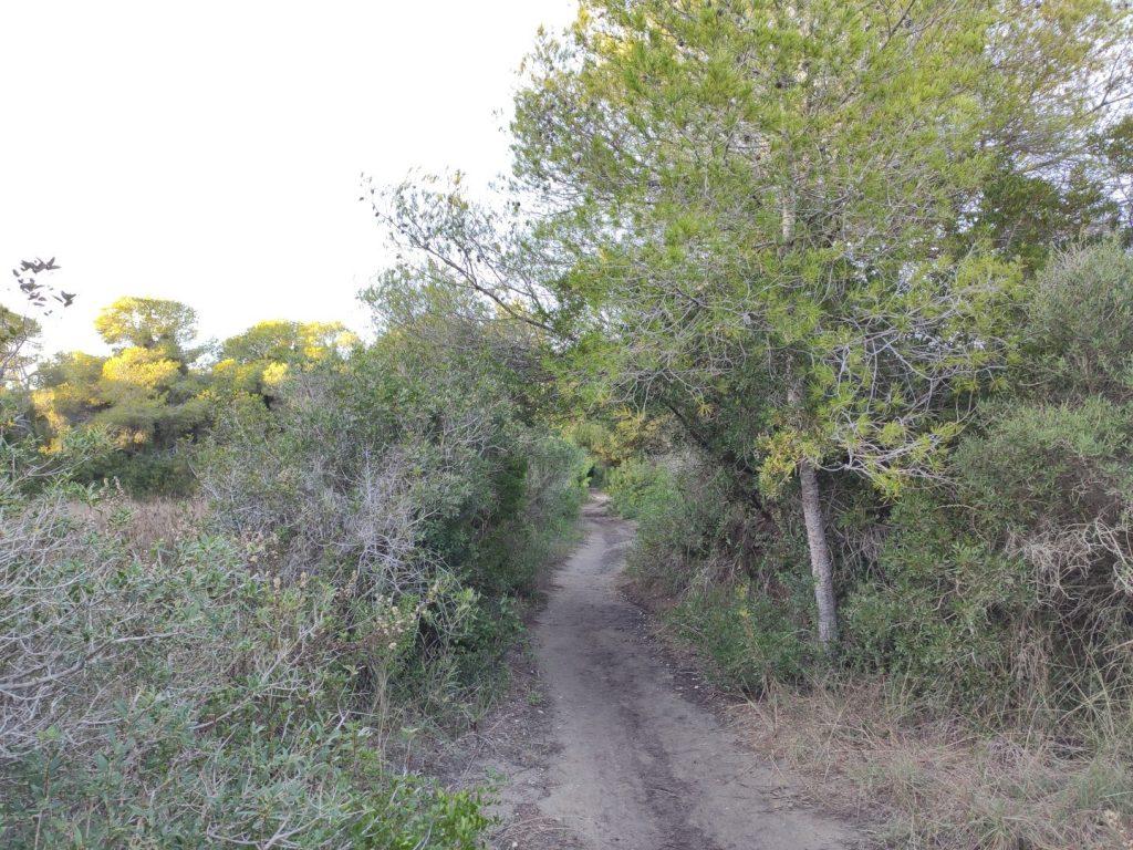 Rutas senderismo en la dehesa del Saler